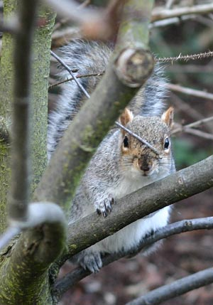 Another photo of a squirrel
